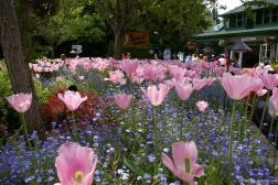 Beautiful pink flowers at the entrance of the Butchart Gardens.jpg