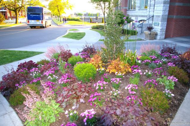 Flower garden in front of 21 Dallas in Victoria.jpg