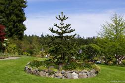 Funky tree at the Butchart Gardens.jpg