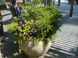 Large potted plant and floral arrangement at the Butchart Gardens.jpg