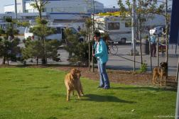 Woman and her dogs at the BC Ferries Tsawwassen Terminal.jpg