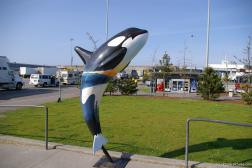 Killer Whale statue at the BC Ferries Tsawwassen Terminal.jpg